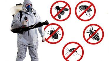 İzmit Körfez böcek ilaçlama